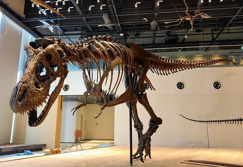 化石や標本などの展示総数はなんと約180点 !