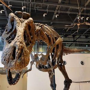 ここでしか見られない貴重な化石も! 長崎市にゆかりの深い恐竜博物館が誕生