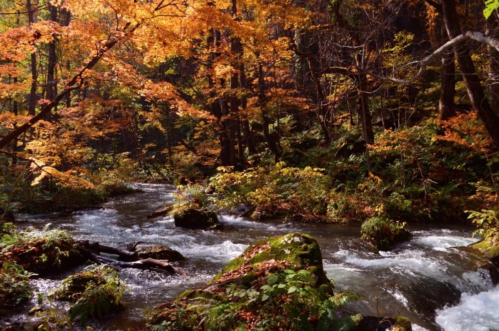ANA 「一度は訪れたい秘湯 不老ふ死温泉と秋の白神・奥入瀬を巡る3日間」