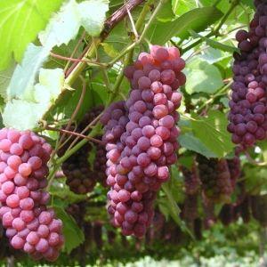 実りの秋、旬のフルーツ狩りにでかけよう【全国】