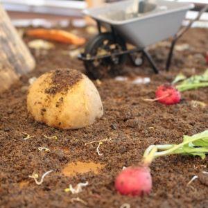 """誰もが驚く「食べられる土」の正体とは?週末""""プチキャンプ""""の楽しみ方"""