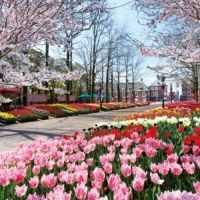ハウステンボスの100万本の大チューリップ&桜の春限定コラボは必見