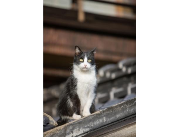 広島県尾道市と猫の関係