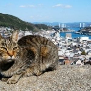 猫好きにはたまらない!猫の街として有名な「広島県・尾道」とは?