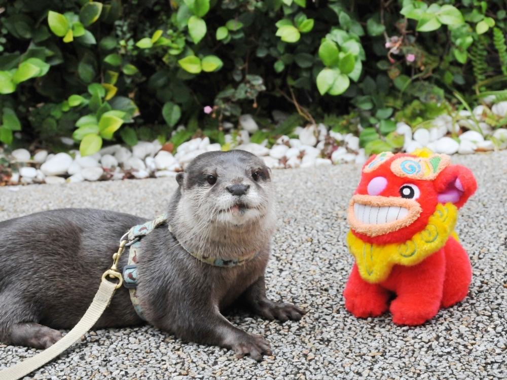 サンシャイン水族館で沖縄気分!食べて・飲んで・観て楽しめるイベント登場その3