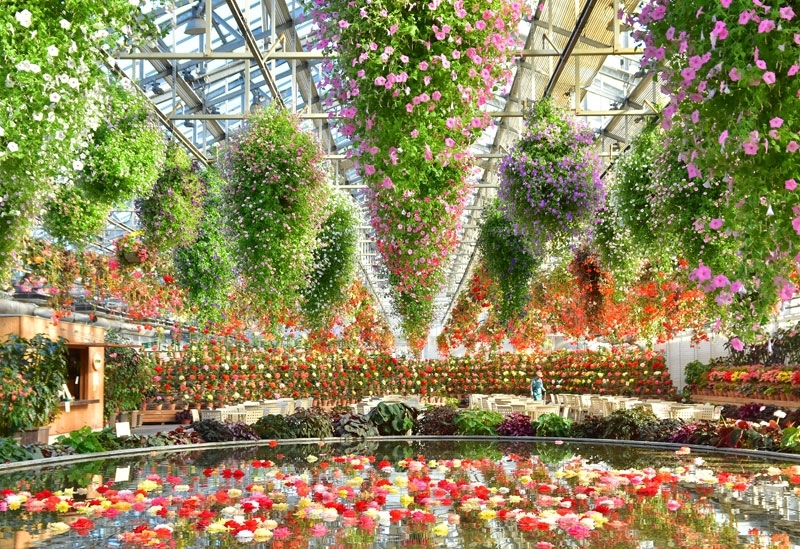 写真映え必至!想像を超えた花の世界が広がる「ベゴニアガーデン」