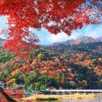 見どころいっぱい!今年行きたい京都のおすすめ紅葉スポット4選