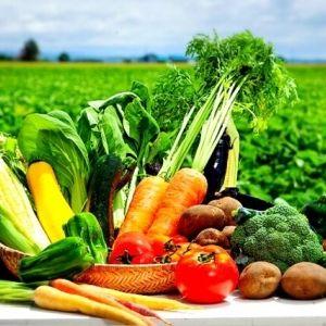 北海道の採れたて野菜を自宅にお届けする「はぐらいふ」とは