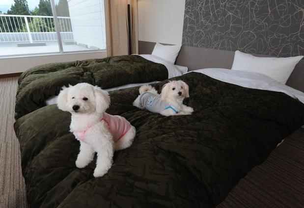 寒い冬はペットと共に宿ごもり①ホテルフォレスタ