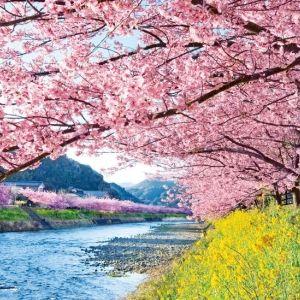 【伊豆】一足先に春を感じよう。「河津桜まつり」にアクセスがいい宿4選