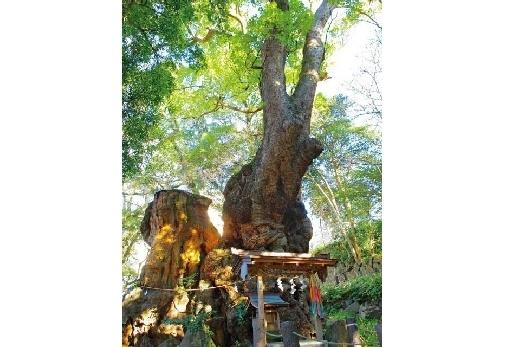熱海で人気のパワースポット「來宮神社」観光