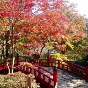 【旅色コンシェルジュが提案】日本一遅い紅葉を楽しむ、熱海日帰り旅行プラン