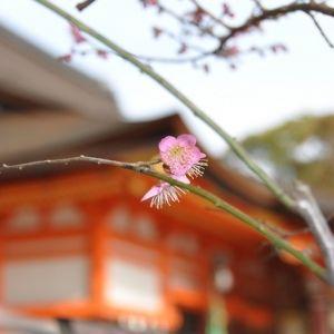 京都観光するなら八坂神社へ!神社巡りの魅力&楽しみ方♪