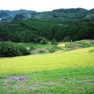 これぞ日本の原風景!「大山千枚田」東京から一番近い棚田|千葉県その0