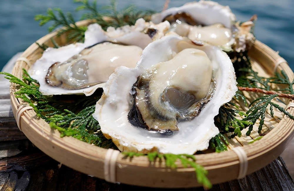 九十九島の牡蠣と白ワインによる最高のペアリングを