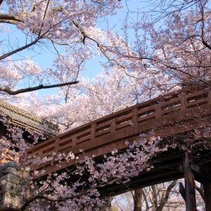 """春の絶景にうっとり。信州の桜の名所""""高遠城址公園""""に出掛けよう!"""