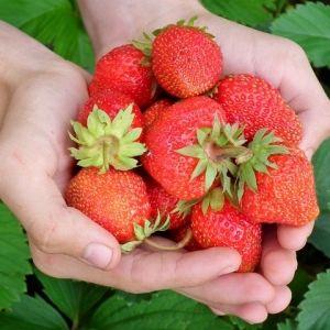 春におすすめ!関西の「イチゴ狩りスポット」4選