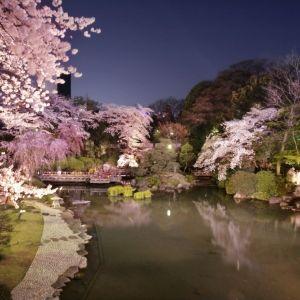 大人のお花見レストランがオープン!原宿駅から徒歩5分の日本庭園へ