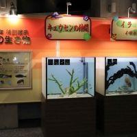 水族館で猪に会える!? 「鴨川シーワールド」で新年ならではの特別展示