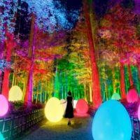 梅まつりとコラボした「チームラボ 偕楽園 光の祭」が2月13日から開催!