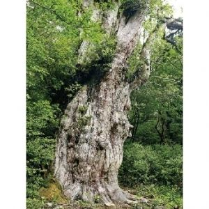 屋久島で自然のパワーをもらう旅へ。おすすめスポット4選