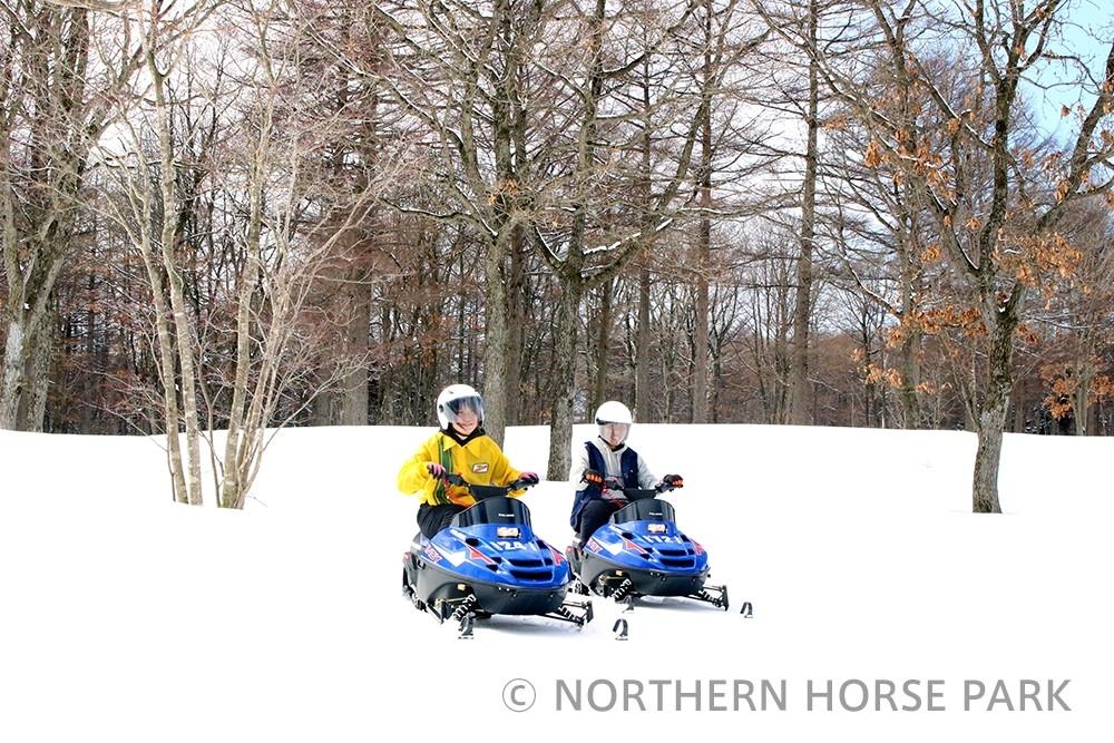 馬と自然のテーマパークで貴重な体験