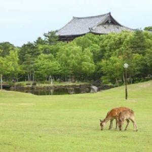 芸術に触れて、美を磨く。奈良の風情ある地を堪能する旅行プランその0