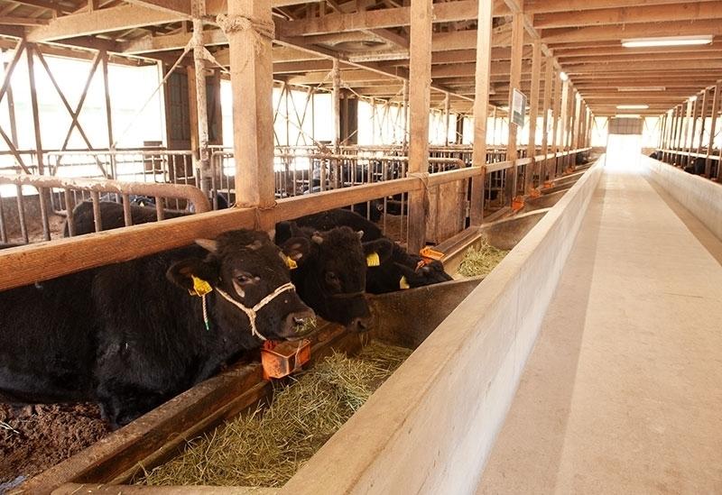 内閣総理大臣賞を受賞した飛騨牛!「飛騨萩原畜産」ではお値打ち価格で販売その4