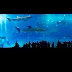 世界第3位はやっぱり凄かった!「沖縄美ら海水族館」でしたいこと。