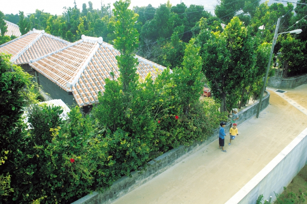 沖縄県の離島「渡名喜島」の魅力③フクギ並木と赤瓦家屋