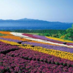 星野リゾート 界 全国14施設にて「乙な花見旅」を提案