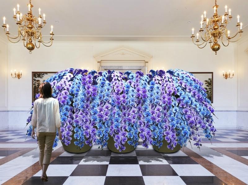 幅4mの大作「青い胡蝶蘭の滝と幻の蘭「尖閣蘭」が登場