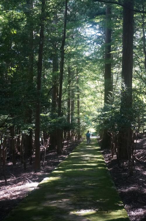 【日本ならいごとの旅 第3回】もうひとつの京都、北山杉の里京北で学ぶ精油と石けん作りその4