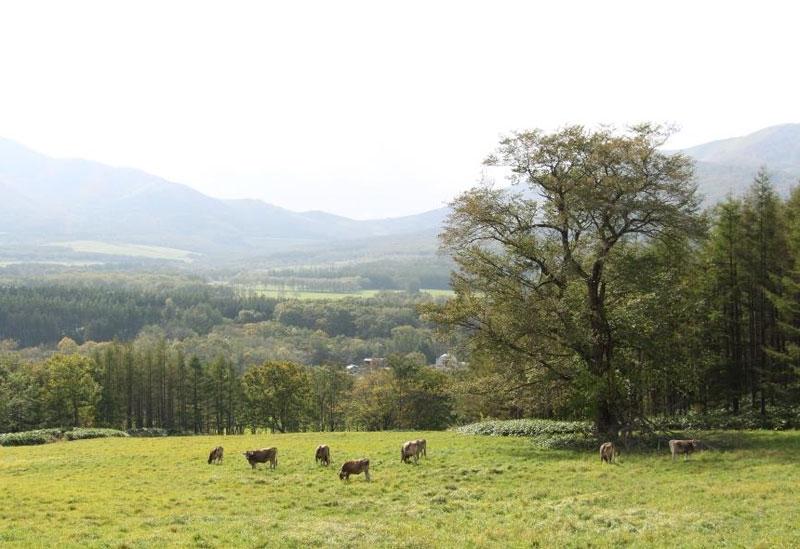 北の大地で営まれる、自然や牛と共にあるチーズ作り