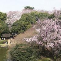 【今日から】上野の隠れお花見スポット? 桜にちなんだ名品展示「博物館でお花見を」が東京国立博物館で開催
