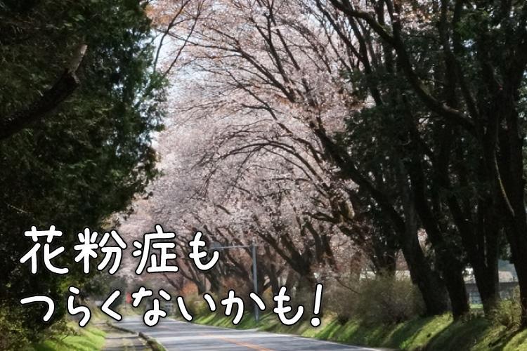 【栃木】約1500本にも及ぶ桜のトンネルが圧巻!「春はドライブインお花見 栃木へ日帰り女子旅」