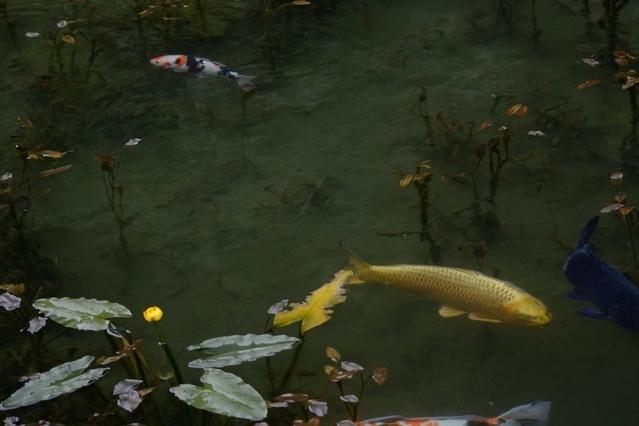 旅色読者がおすすめする東海・北陸の観光スポット③モネの池