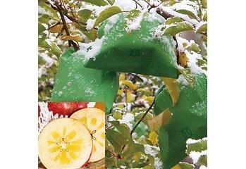 寒ざらしりんご