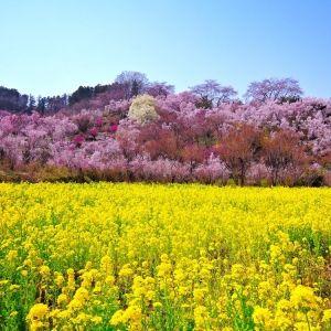 春が来た!今年は「福島市」の自然にパワーをもらう旅をしよう