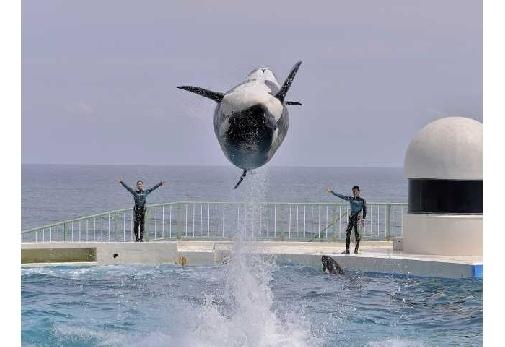 海の生き物たちに癒される「鴨川シーワールド」