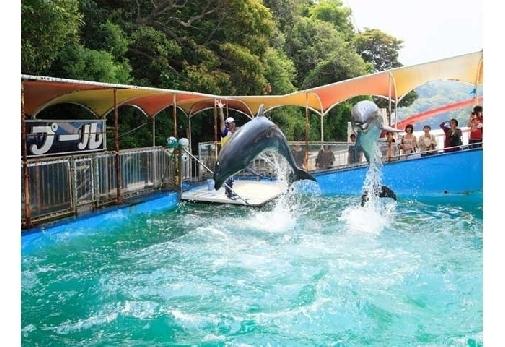 イルカを間近に感じられる施設①イルカ島