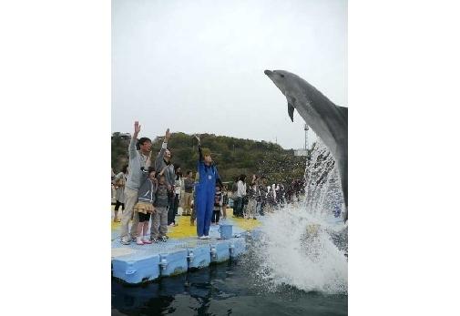 イルカを間近に感じられる施設②日本ドルフィンセンター