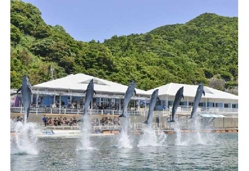 イルカを間近に感じられる施設④うみたま体験パーク「つくみイルカ島」