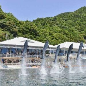 キュートな姿に癒されに行く。イルカに会えるおすすめの施設4選