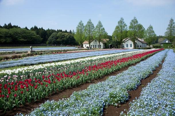 春ならではの花の共演「こもれび森のイバライド」