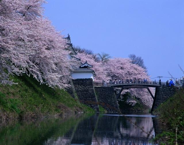 【6】山形城跡と桜の共演に癒される「霞城公園」