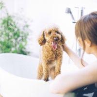 愛犬と泊まれる露天付客室の宿「D+KIRISHIMA」と待望の露天風呂が営業再開!