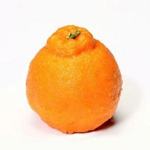 旬のフルーツを食べよう!みかん王国愛媛から直送「吉田みかん」のデコポン