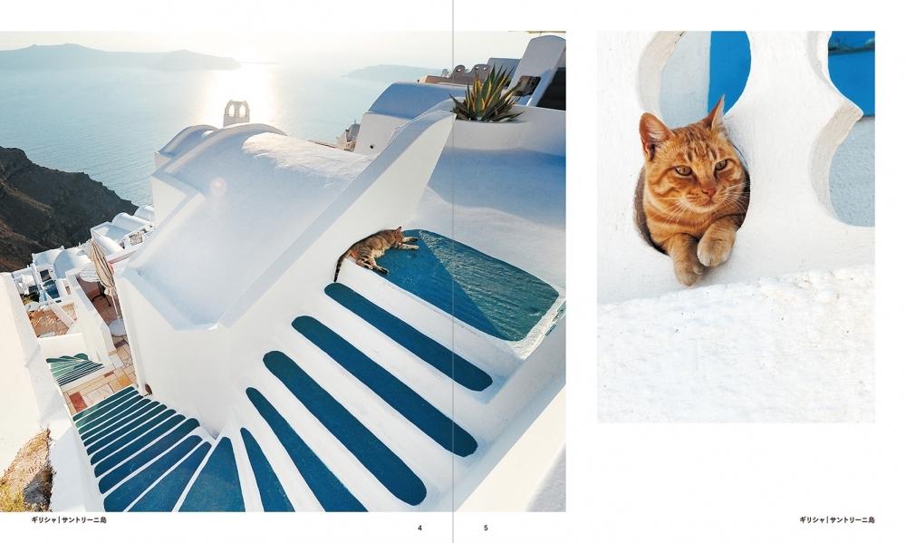 12月11日(月)発売『世界の街猫』