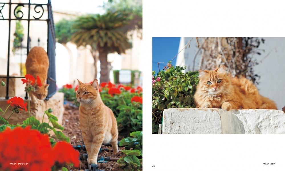 パリの街角から、日本の離島まで。猫のいる街は美しい!『世界の街猫』発売その3